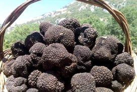Tartufo nero di Colliano
