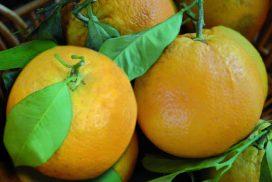 Arancia di Pagani